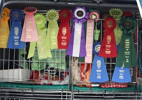 Ribbons Greater Pittsburg Labrador Retriever Club
